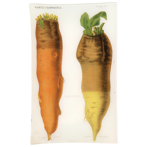 III - Betteraves d'Allemagne (Vegetable)