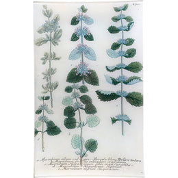N. 710 Common White Horehound