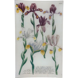 N. 610 Purple Bulbous Iris