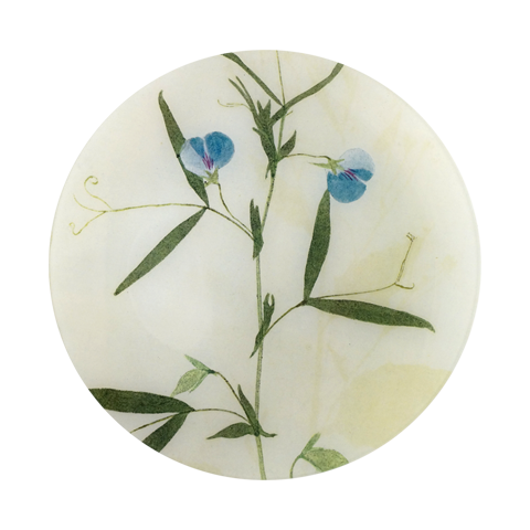 #34 - Lathyrvs (Blue Sweet Pea) Pressed Leaves