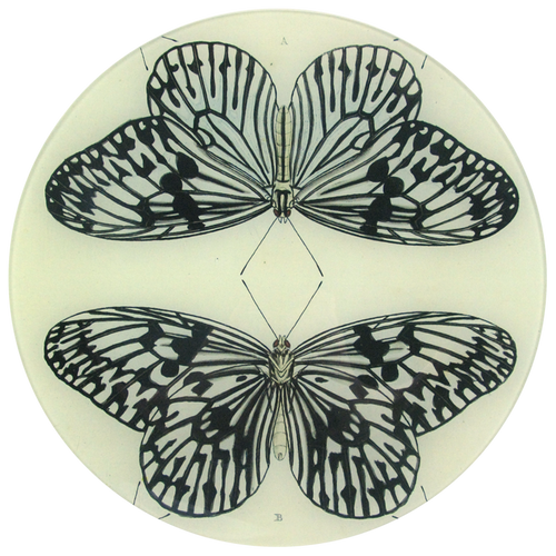Mirrored Butterfly