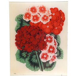 An eleven by fourteen handmade decoupage tray with red flowers title Pelargonium 1868