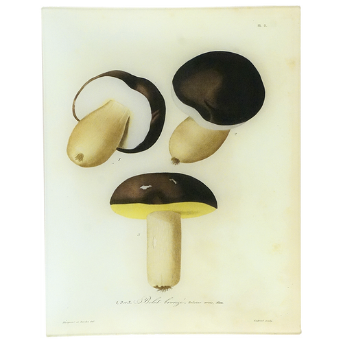 Mushrooms - Pl. 3