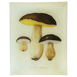 Mushrooms - Pl. 5