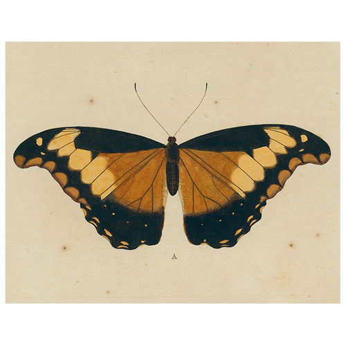 Brown Butterfly A (p 110)
