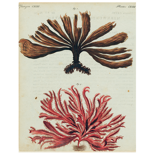 Brown and Red Seaweed (p 121)