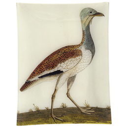 #3 - Female Bustard