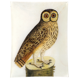 #1 - Great Brown Owl