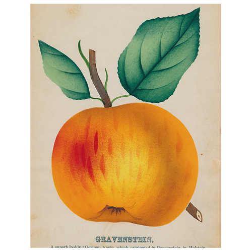 Gravenstein Apple (p 132)