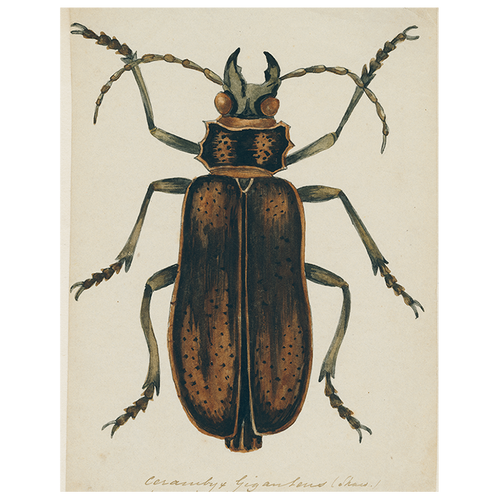 Brown Insect (p 212)
