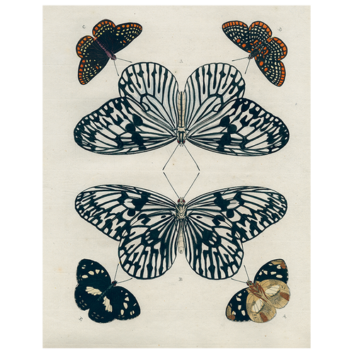 Mirrored Butterfly (p 228)