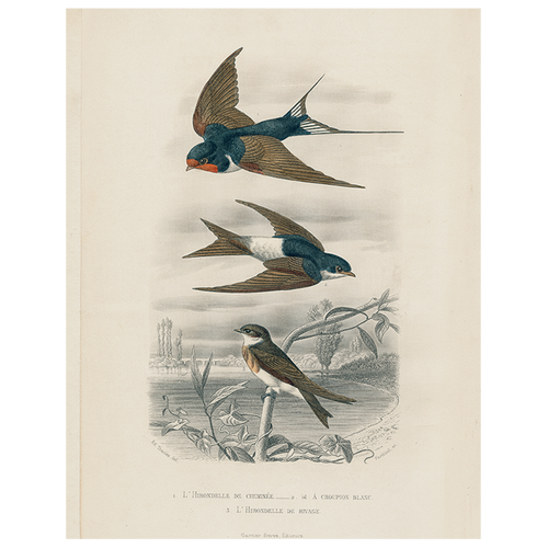 Swallows (3 Birds) (p 236)