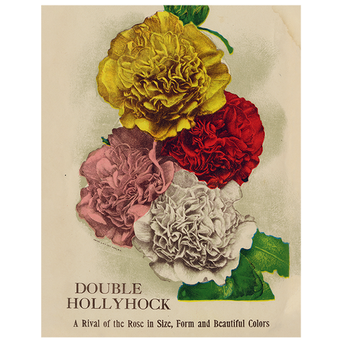 Double Hollyhock (p 265)