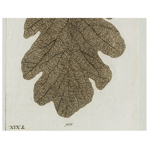 Brown Leaf (p 338)