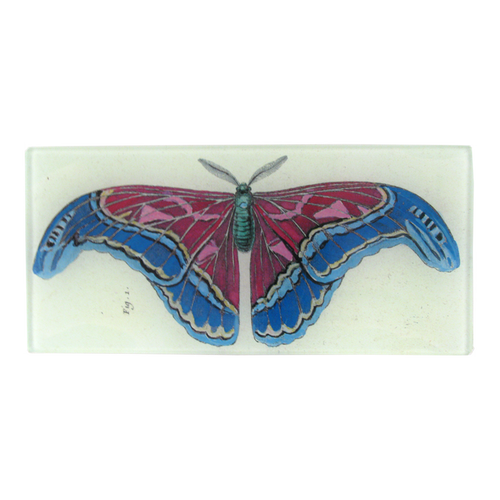Figure 1 Pink Blue Butterfly