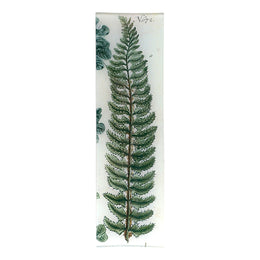 Lonchite (Fern)