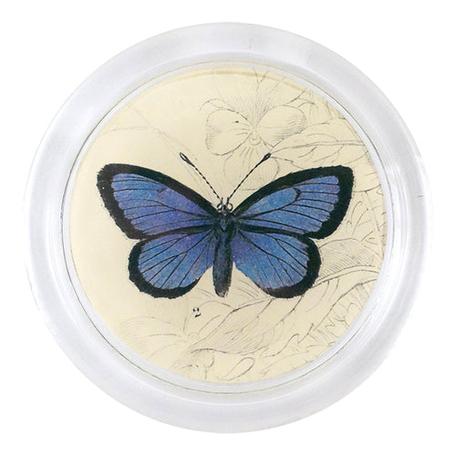 Alcon Blue Butterfly (19th c. Naturalist)