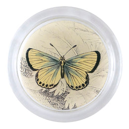 Chalkhill Butterfly (19th c. Naturalist)