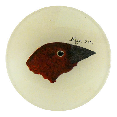Bird Heads (Figure 10)