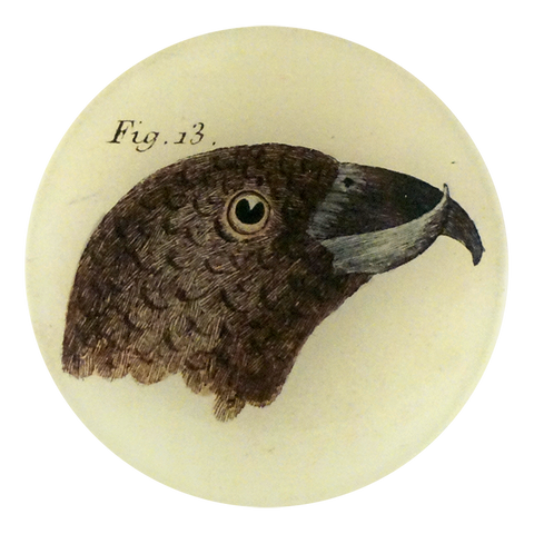 Bird Heads (Figure 13)