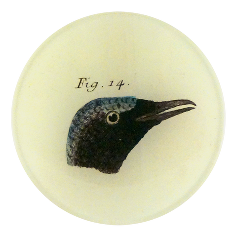 Bird Heads (Figure 14)