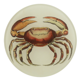 Oval Crab