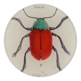 Brazil Bug is a green and red bug in a handmade decoupage in a four inch round plate
