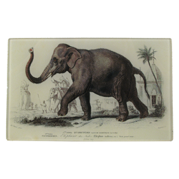 Elephant des Indes