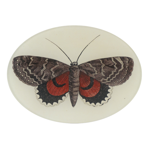 Red & Brown Butterfly
