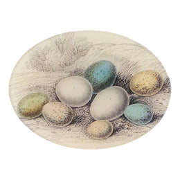 8 Eggs in Grass