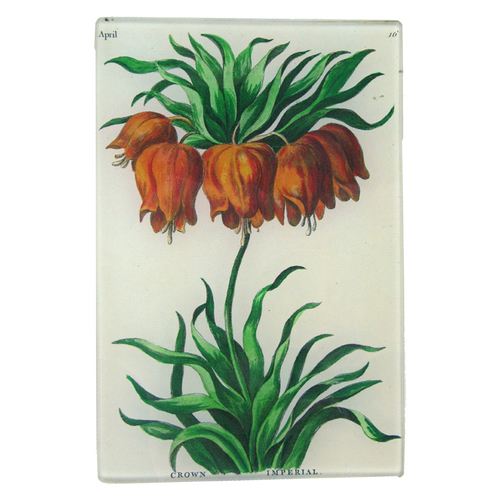 Crown Imperial (Bowles Florists)