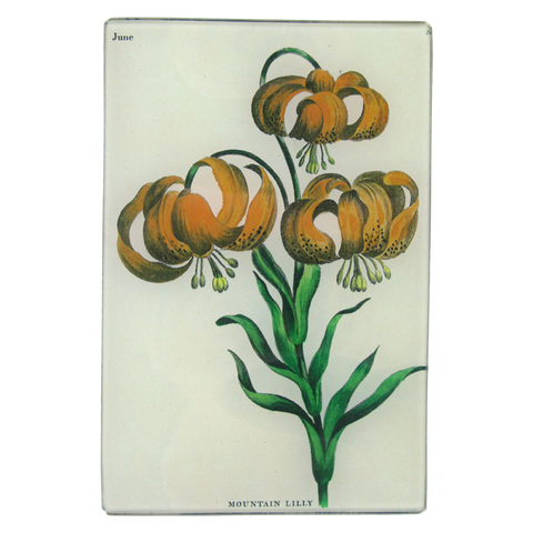 Mountain Lily (Bowles Florists)