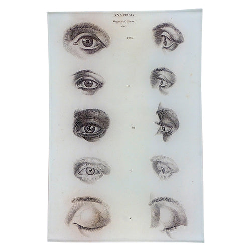 Anatomy: Eyes