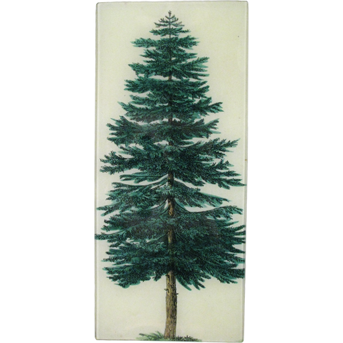 Evergreen Tree