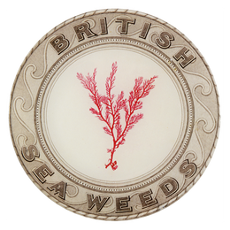 Red British Seaweeds
