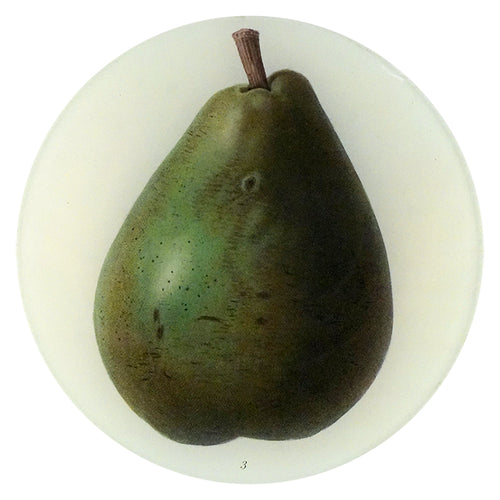 Chaptal Pear (Fruits)