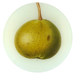 Doyenne Pear (Fruits)