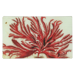 Red Seaweed