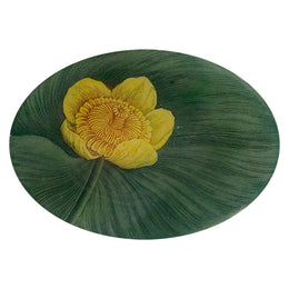 Yellow Nymphaea
