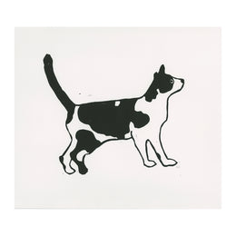 Black and White Cat with Tail Up