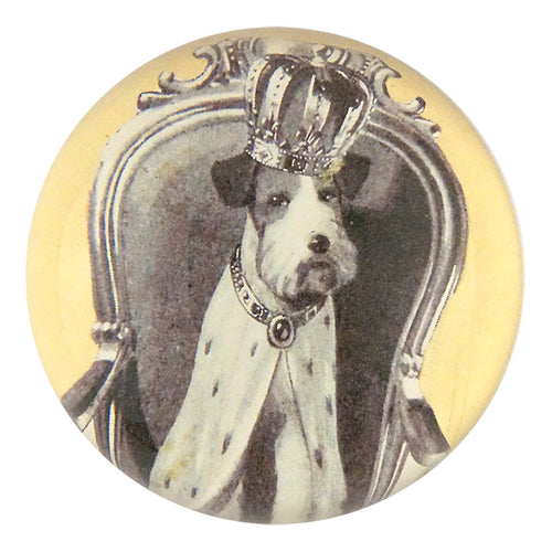 Crowned Dog