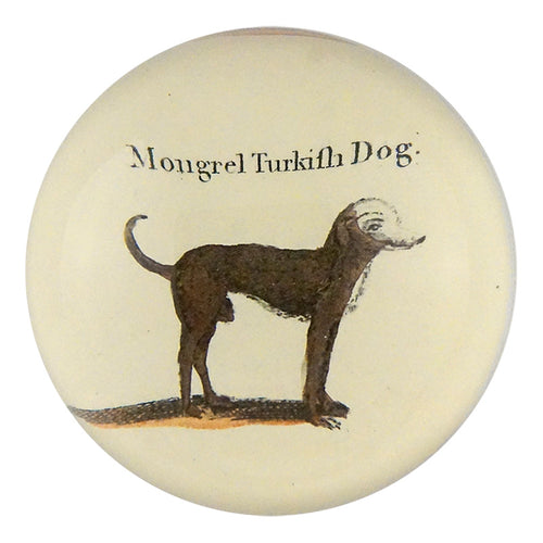 Mongrel Turkish Dog