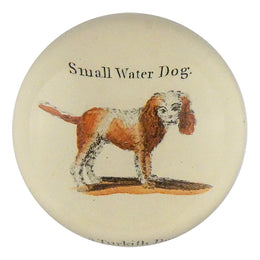 Small Water Dog - SALE