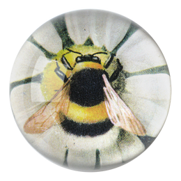 Fuzzy Bee on Green Daisy dome paperweight