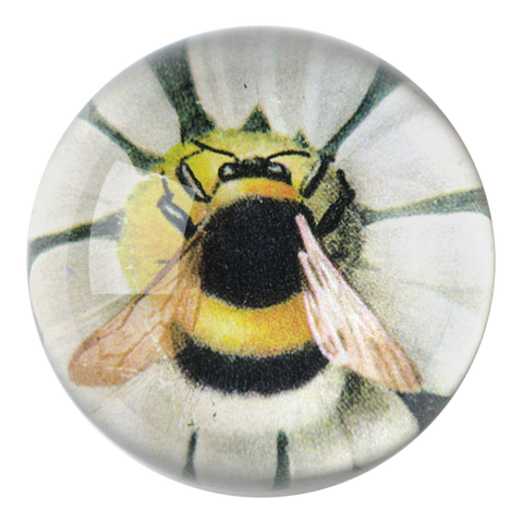 Fuzzy Bee (Green Daisy)