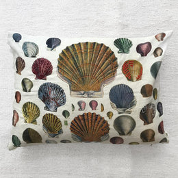 Captain Thomas Brown's Shells Pillow