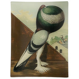A rectangle handmade decoupage sale tray titled Green-Pied Pouter Cock
