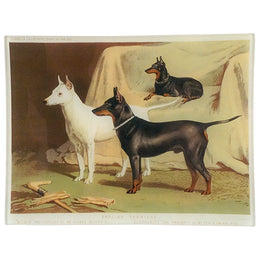 English Terriers - FINAL SALE