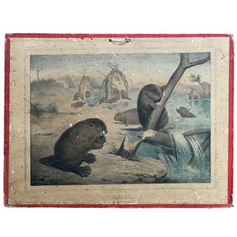 "19th Century French Lithograph ""Castor"" - Beaver"