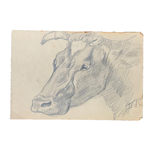 Evert Rabbers Cow Drawing 34